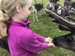 child feeding reindeer