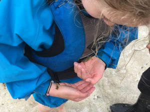 child holding baby crabs