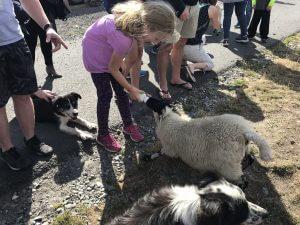 child bottle feeding lamb