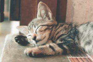 kitten sleeping in the sun